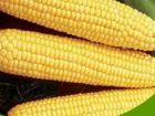 postre: Pastel de choclo - maiz